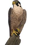 猛禽類のイメージ