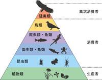 生態系ピラミッドのイメージ