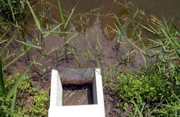 水際部には抽水植物を植栽