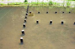 貝・稚魚の生息環境の創出