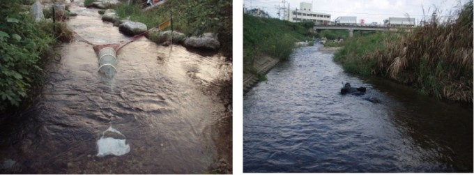 籠川_遡上調査&魚類の生息状況調査